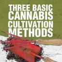 Trois méthodes basiques de culture du cannabis