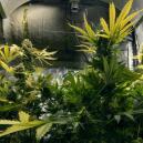 Utiliser Du CO₂ Pour Augmenter Vos Récoltes De Cannabis