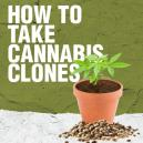 Comment prélever des clones de Cannabis