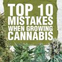 Top 10 des erreurs commises en cultivant du cannabis, et comment les éviter