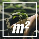 Combien De Pieds De Cannabis Par Mètre Carré ?