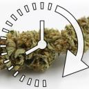 Comment Vite Sécher Vos Têtes Fraîches De Cannabis