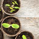 Des Cannabinoïdes Dans D'autres Espèces Végétales ?