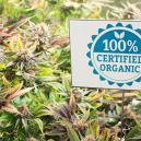 Méthodes Organiques De Lutte Contre Les Nuisibles Pour Les Plants De Cannabis