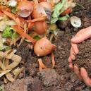 Cannabis Et Compost Maison : Comment Le Faire, Le Conserver Et l'Utiliser