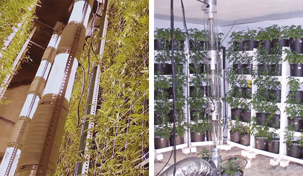 Vertical Cannabis cultivation