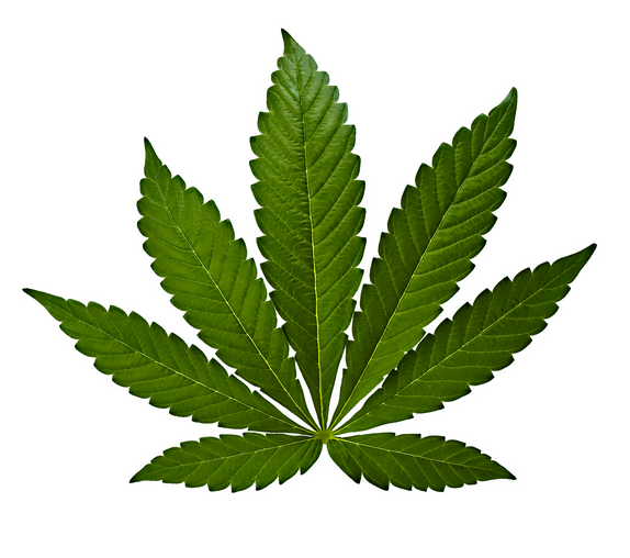 Cannabis Indica feuille