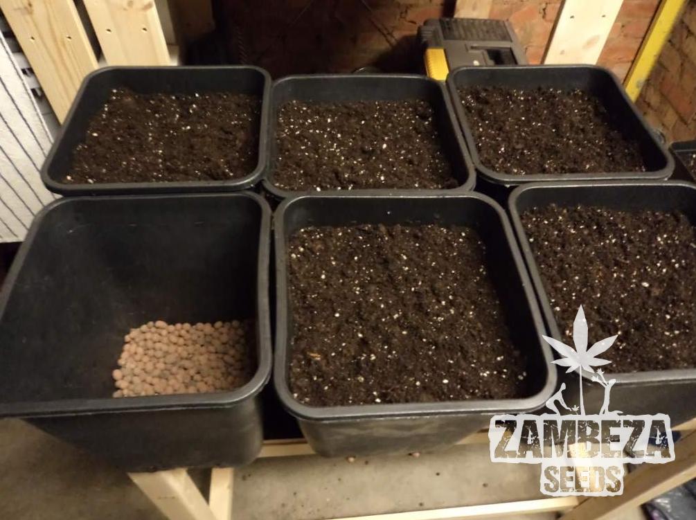 Comment cr er votre propre sol pour vos graines de cannabis for Terreau cannabis exterieur