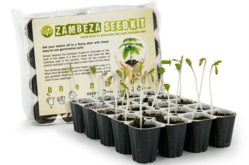 Comment faire germer des graines de cannabis - Faire germer des graines ...