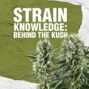 Connaissance des variétés : Derrière les Kush