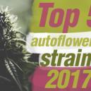 Un Top 5 Des Variétés À Autofloraison De 2017