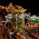 Guide Du Séchage Et Affinage Des Fleurs De Cannabis