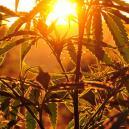 Cultiver Du Cannabis En Extérieur : De Quelle Quantité De Lu