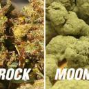 Moonrocks VS Sunrocks - Trop puissants ?