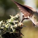 Comment Empêcher Les Oiseaux De Trainer Autour De Vos Plants