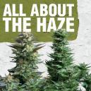 Tout sur la Haze