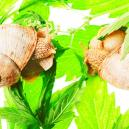 Top 10 des raisons pour une croissance ralentie du cannabis