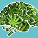 Comment le cannabis affecte votre cerveau