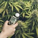 Augmentez vos récoltes grâce au luxmètre