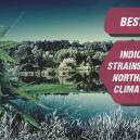 Meilleures variétés de cannabis indica pour climat nordique