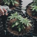 Comment choisir les bons pots pour vos plants de cannabis?