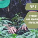 Top 5 des variétés pour cultivateurs débutants
