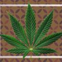 Que sont les feuilles nourricières du cannabis ?