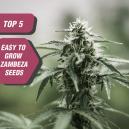 Top 5 Des Variétés Faciles À Cultiver De Zambeza
