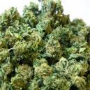 Super Cropping Des Plants De Cannabis